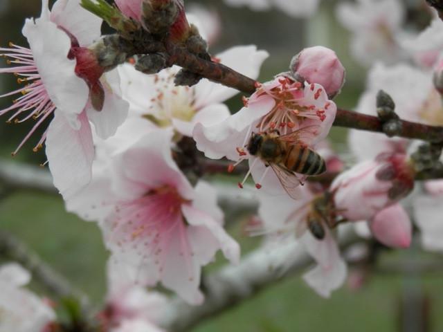 © Dan Schellenberg Bees.jpeg