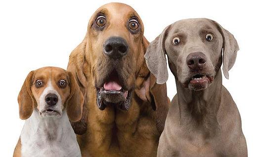 dogs_surprised.jpg
