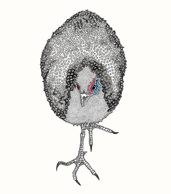 Alison Seda, Artist - Pen and Ink/Watercolor - San Diego, CA