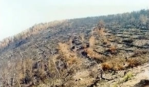 Attica's Forest Fires Flood Protection