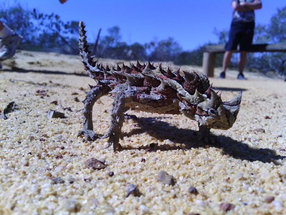 Upclose with Kalbarri's wildlife!