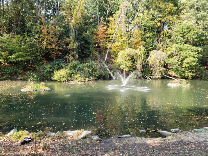 Duck pond at Round Hill Park.