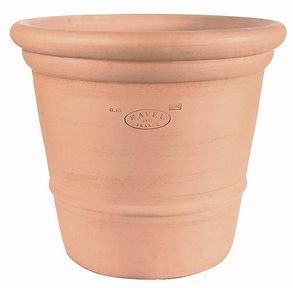 pot-camelia.jpg