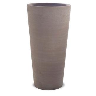 Cycas-fin-gris.jpg