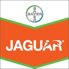 Jaguar - 5L