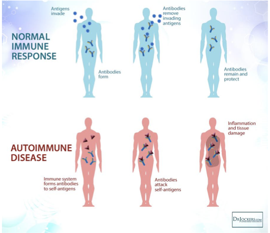 Immune response verse autoimmune response