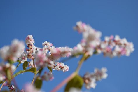Flowery Inspiration