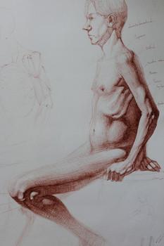 Anatomy Study. ink on paper. 2019