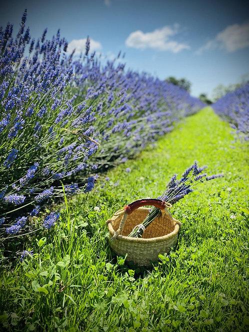 Fresh Lavender Flower Bundles