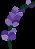 Lavenderland-logo.png