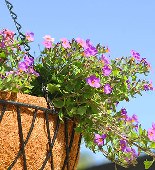 Purple and Pink Hanging Flowers
