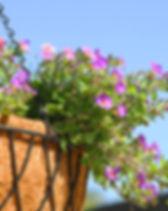 Paars en roze Opknoping Bloemen
