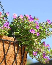 紫とピンクの花ハンギング