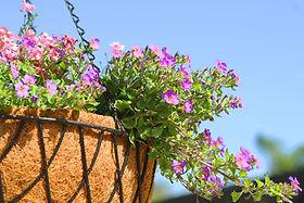 Fleurs Hanging pourpre et rose