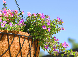 Its time to plant up summertime hanging baskets