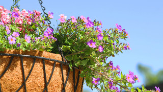 SF23 Hanging Flowers