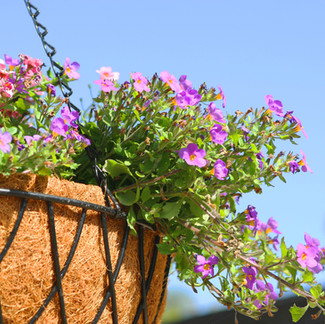 How To Care for Annual Flower Containers