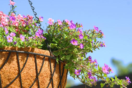 Nivelles, ville fleurie