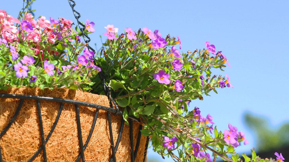 July in the Garden