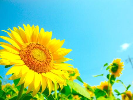 【夏休みが本格的に始まり、】(No.1798)