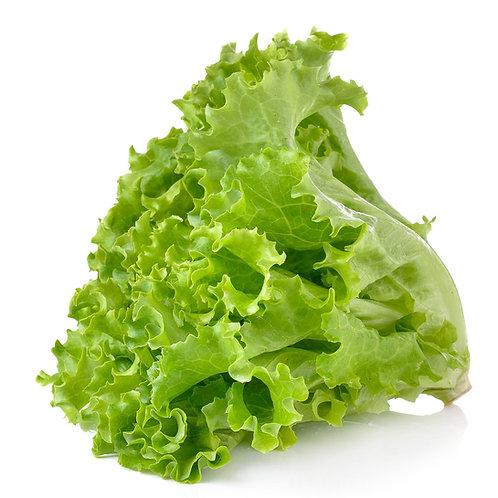 Lettuce Green Leaf - Per Kg