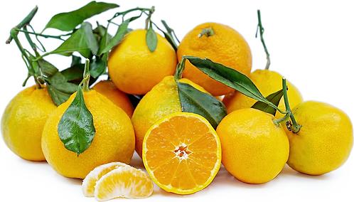 Mandarines Avana per kg