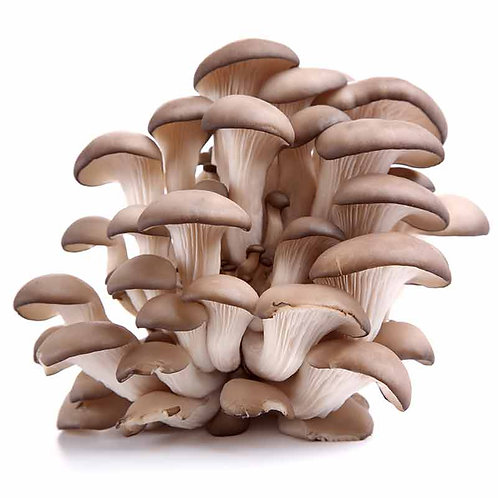 Mushrooms Pleurotus (per Kg)