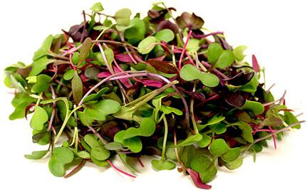 Micro Greens Harvested Tub