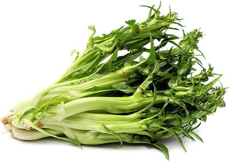 Chicory Puntarella per kg