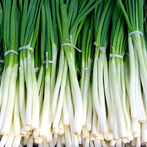 Onions - Spring Onion Bunch 200g