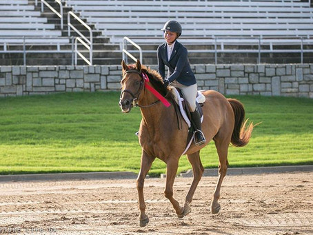 Resolutions For The Average Equestrian