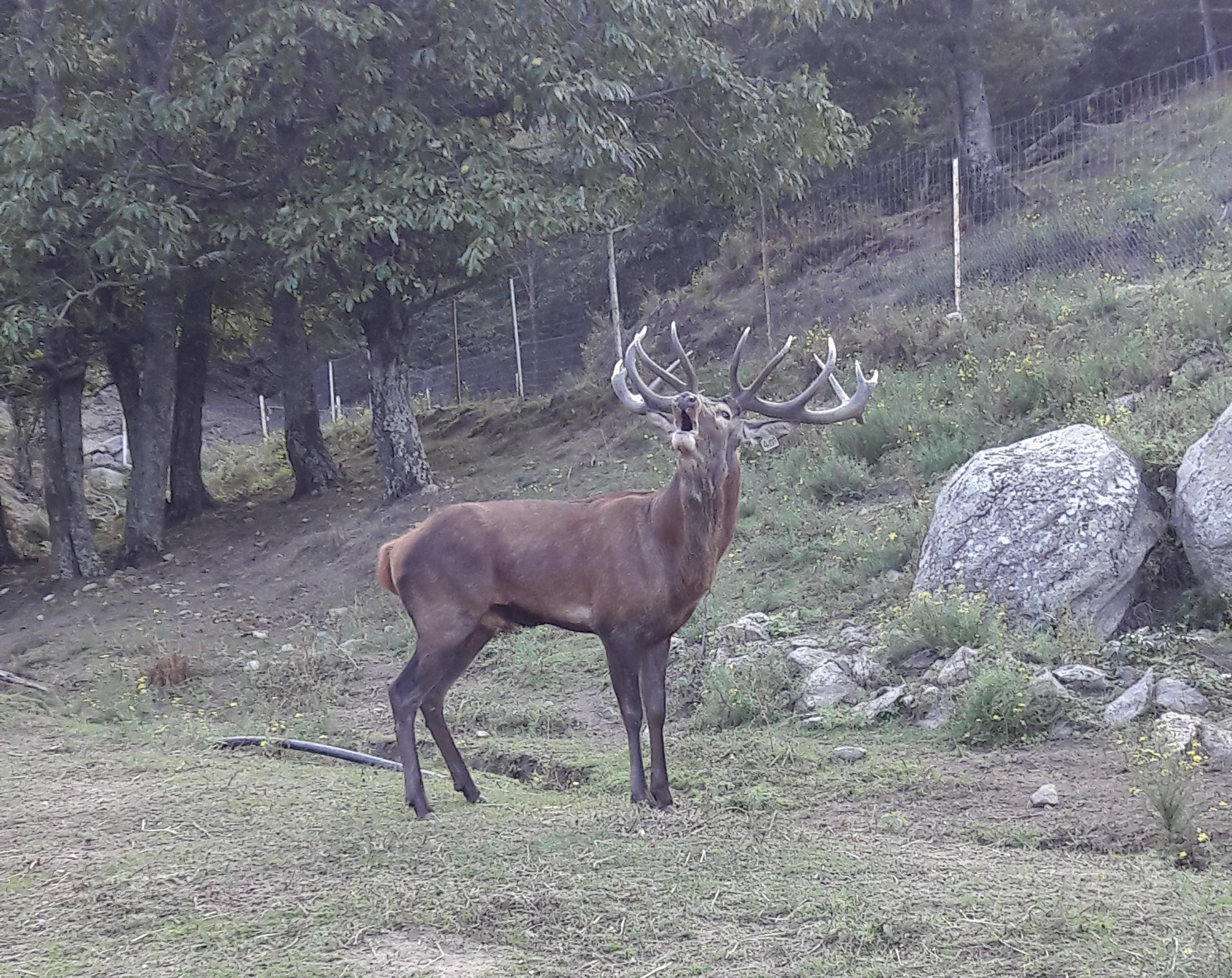 séjour chasse cerf trabucayres