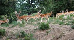week end chasse daims trabucayres