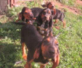 parc d'entrainement de chien de chasse à la chasse des trabucayres à las illas