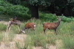 week end chasse cerf sika trabucayre