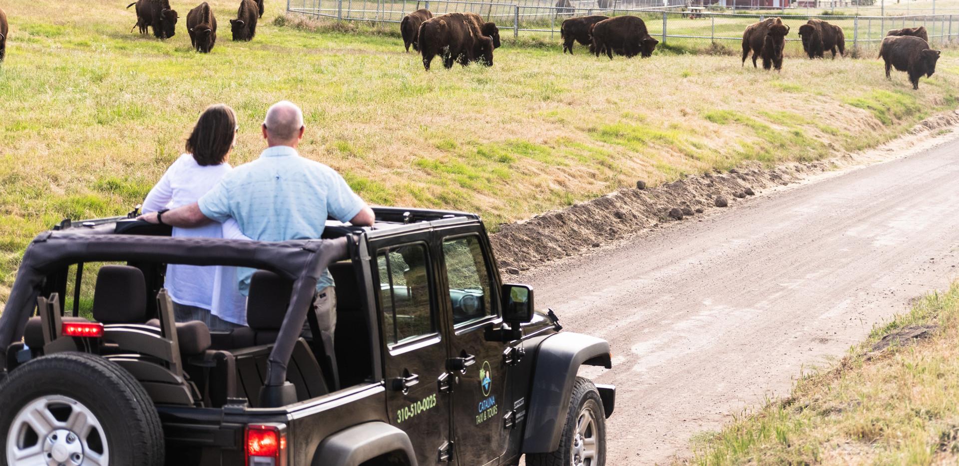 Jeep Tour of Catalina Island