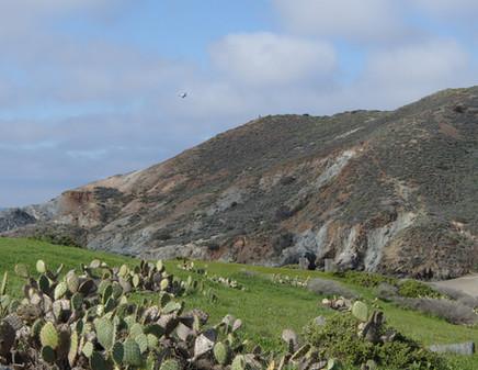 Catalina views