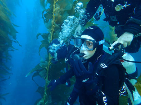 What to Expect From the Discover Scuba Dive on Catalina Island