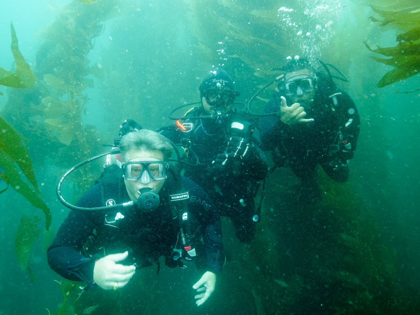 Guided dive Catalina