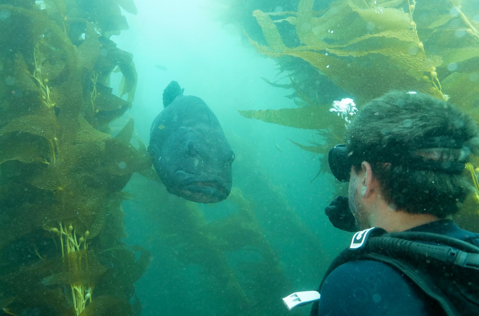 sea bass in the Casino Dive Park