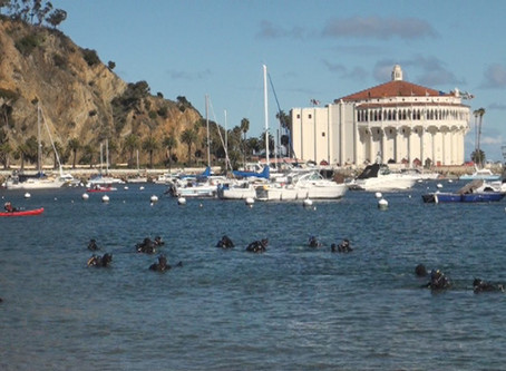 5 Reasons to Dive at the Avalon Harbor Underwater Cleanup