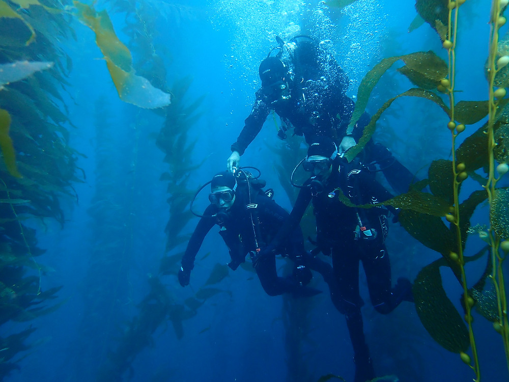 Discover Scuba Dive on Catalina Island