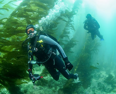 scuba diving on Catalina Island