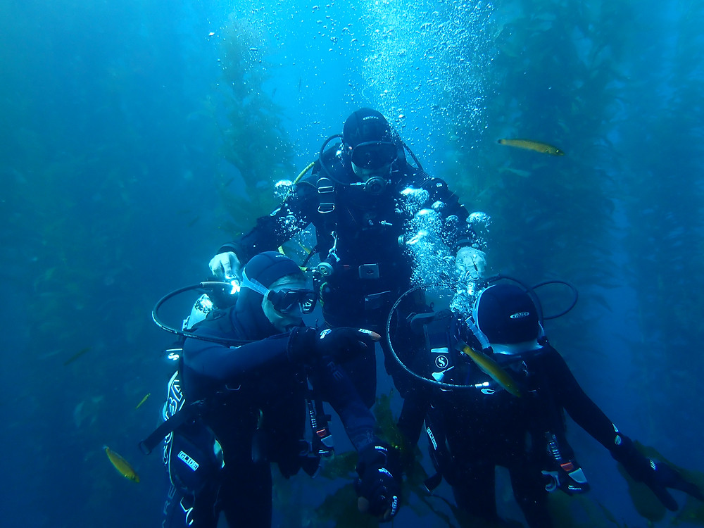Marine life on the Discover Scuba Dive