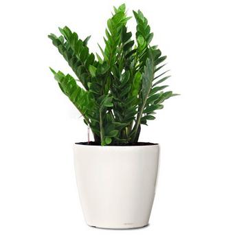 Various Plants POA