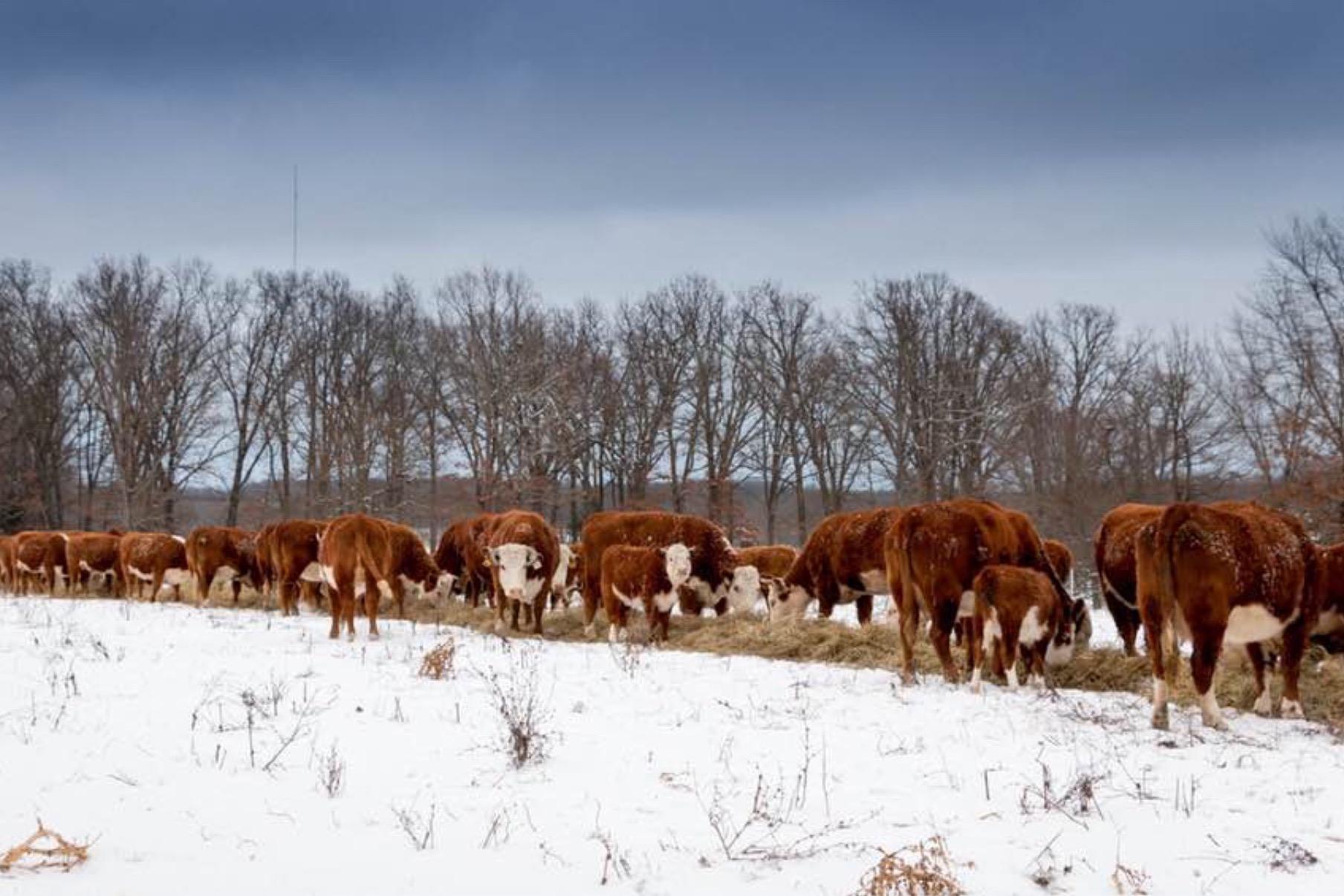hayfeeding.jpg