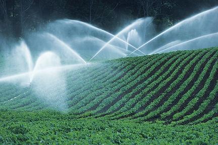 Los campos de irrigación