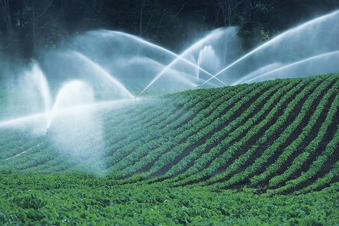 campi di irrigazione