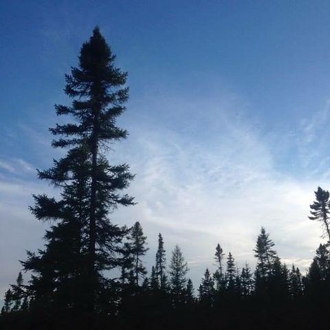 trees up north square.JPG