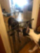 meeting dogs1.jpg